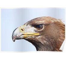 Adler Poster