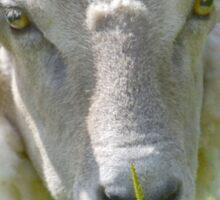 Tickled Ewe Sticker