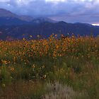 Pike's Peak and a field of sunflowers by dfrahm