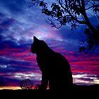 Dusky Cat by kurrawinya