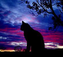 Dusky Cat by Penny Kittel