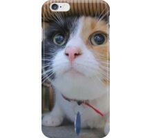 Calico Cat for Adoption iPhone Case/Skin
