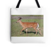 White-tailed deer with velvet antlers in spring Tote Bag