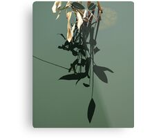 Reflections of Leaves Metal Print