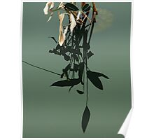 Reflections of Leaves Poster