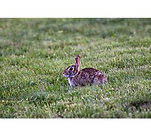 Hoppy to have Breakfast Photographic Print