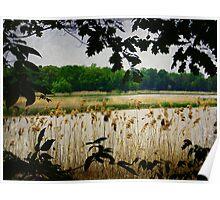 Old Woman Creek - Natural Framing Poster