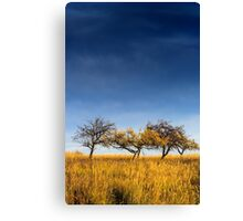 yellowed tree in a field under a dark autumn sky Canvas Print
