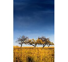 yellowed tree in a field under a dark autumn sky Photographic Print