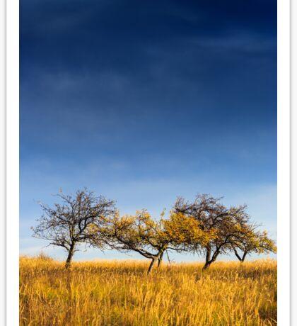 yellowed tree in a field under a dark autumn sky Sticker