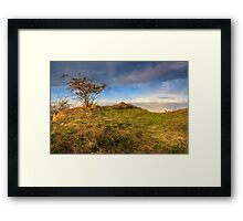 autumn wild rose and stone on a yellowed hill Framed Print