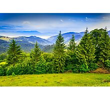 row of trees in mountains Photographic Print