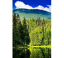 freshness near forest Photographic Print