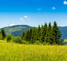 coniferous forest on a mountain slope Sticker