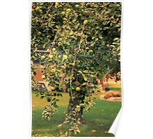 Apple Tree In A Small Town Poster