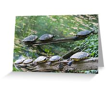 tortoise on lake Greeting Card