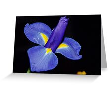 Violet Greeting Card