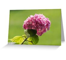 hydrangea in the garden Greeting Card