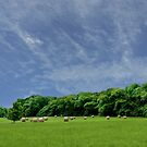Bales of Hay, Green Fields and Blue Skies - Brittany Country side by Buckwhite