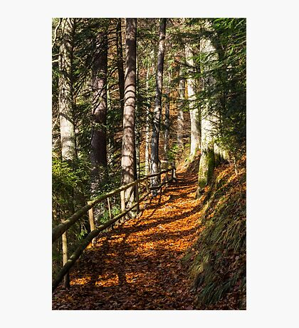morning walks in autumn forest Photographic Print