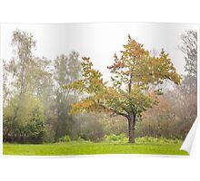 lonely oak in fog Poster