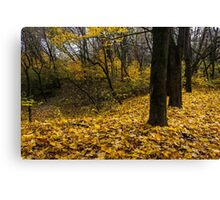 autumn forest in foliage Canvas Print