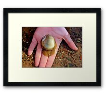 The Northern Moon Snail Framed Print