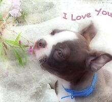 I Love You ~ Boston Terrier Greeting Card by Susan Werby