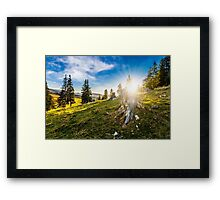 coniferous forest on a hillside in foggy mountains at sunset Framed Print