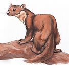 Pinemartin 2 by shiro