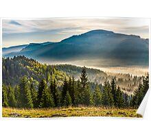 fog on hot sunrise in forest Poster