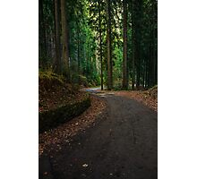 old curve road through forest Photographic Print
