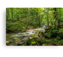 Mountain stream in green forest Canvas Print