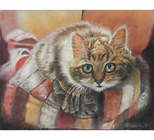 Cat Art - Cute Cat looking at you Photographic Print