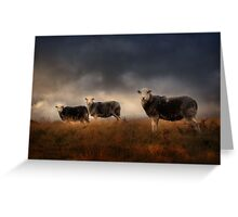 Herdwick treo Greeting Card