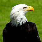Eagle Sam by Barnbk02