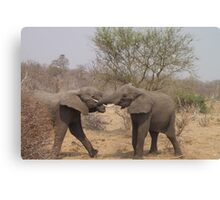 Two African Elephants Fighting with Trunks Canvas Print