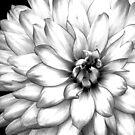 Black and White by Bernie Garland