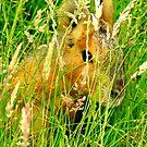 Mara in the Long Grass by Barnbk02