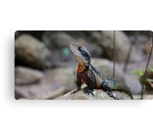 Water Dragon - Colourful Australian Lizard Canvas Print