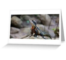 Water Dragon - Colourful Australian Lizard Greeting Card