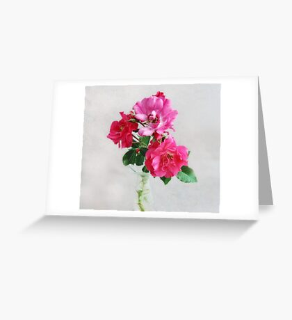 Three Old Fashioned Roses Greeting Card
