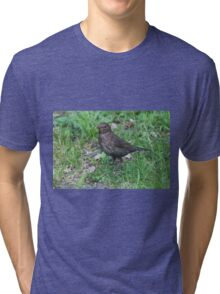 bird on the meadow Tri-blend T-Shirt