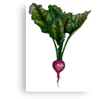 Rooted: The Radish Canvas Print