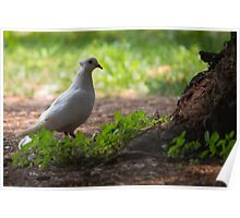 pigeons in the park Poster
