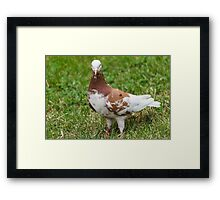 pigeons in the park Framed Print