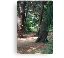 tree in the forest Canvas Print