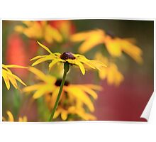 Depth of Field Flower Poster