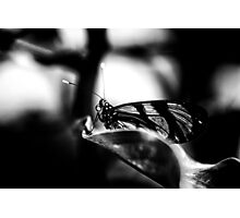 Ethereal Photographic Print