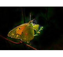 Fractal Butterfly Of Kolkhoz Photographic Print